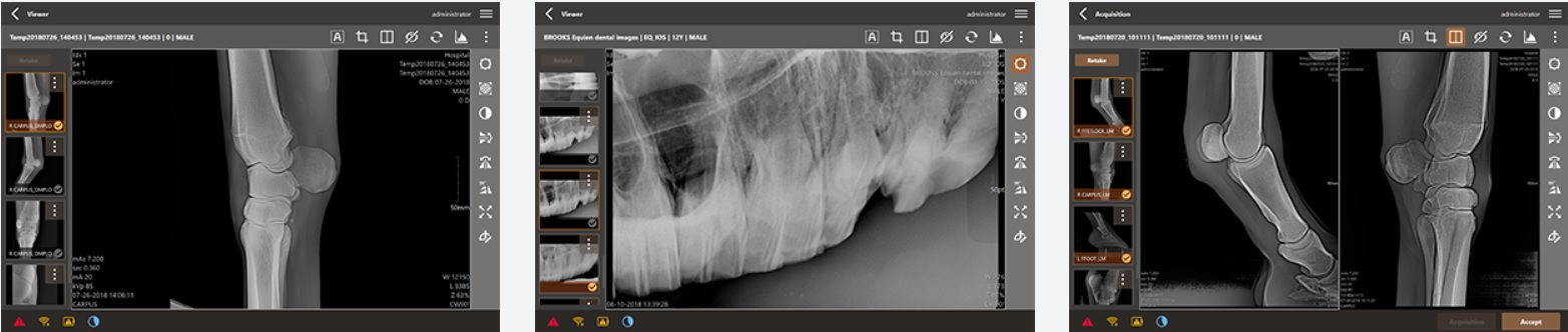 equine x-ray imaging